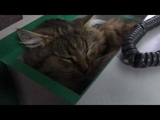 Офисный кот.